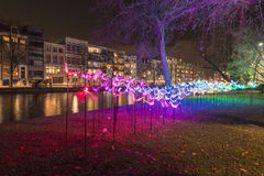 Flowers, Amsterdam lights festival 2014 Stock Images
