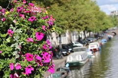 Flowers and Amsterdam. Pink petunias flowers and canal in summer Amsterdam Royalty Free Stock Photos