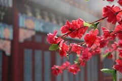 Flowers with ancient architectural background royalty free stock photography