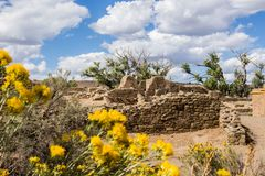 Flowers and ancient Native American ruins, Aztec Pueblo, New Mexico royalty free stock images