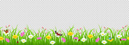 Free Flowers And Grass Border, Yellow And White Chamomile And Delicate Pink Meadow Flowers And Green Grass, Butterflies And Royalty Free Stock Photography - 114615917