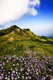 Flowers And Mountains Stock Photography