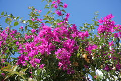 Flowers. In Andalusia from Spain Stock Photography