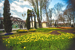 Flowers during the annual April tulip festival in Istanbul in Gulhane Park Royalty Free Stock Photography