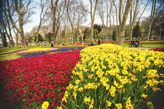 Flowers during the annual April tulip festival in Istanbul in Gulhane Park Stock Image