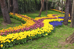 Flowers during the annual April tulip festival in Istanbul in Yildiz Park Stock Photos