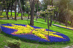 Flowers during the annual April tulip festival in Istanbul in Yildiz Park Stock Images