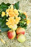 Flowers and apple on hay Stock Images