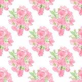 Flowers of Apple Stock Photo