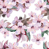 Flowers of apple .Watercolor painting. Stock Photo
