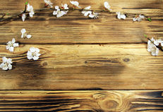 Flowers of apricot tree on wooden background Royalty Free Stock Photos
