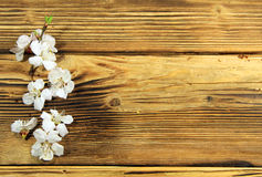 Flowers of apricot tree on wooden background Royalty Free Stock Photography