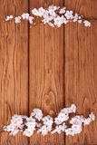 Flowers of apricot on a wooden surface Stock Image