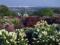 Flowers and architecture - Kiev Royalty Free Stock Photos