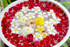 Flowers for aromatherapy floating in a bowl Royalty Free Stock Photos