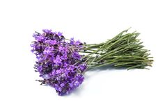 Lavender flowers on white background stock photography