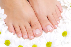 Flowers around beautiful female feet Royalty Free Stock Photos
