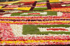 Flowers arranged as a carpet Stock Image