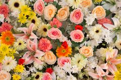 Flowers arrangement Stock Image