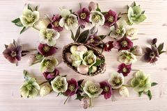 Flowers arrangement with white purple lenten roses and Easter eggs over light wood. Top view royalty free stock photo