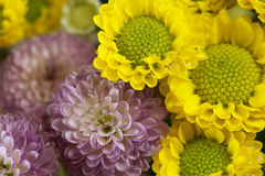Flowers art closeup. Floral background Royalty Free Stock Images