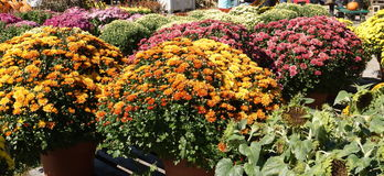 Flowers as far as you can see. Flowers on sale at the farmers market stock images