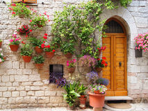 Flowers of Assisi. Colorful flowers outside a home in the Italian hilltown of Assisi royalty free stock photo