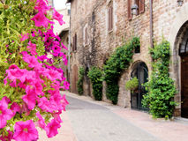 Flowers of Assisi Stock Photos