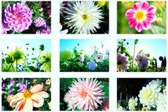 Flowers autumn Royalty Free Stock Image
