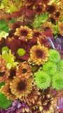Flowers autumn  hrisantems. Nature  flora flowers hrisantems green Stock Photos