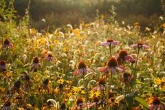 Flowers in autumn Stock Photo