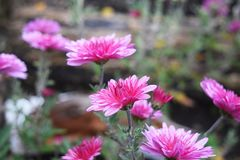 Flowers in autumn. Autumn flowers in the woods in the evening Royalty Free Stock Image