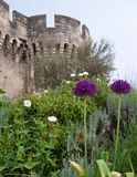 The flowers of Avignon Stock Photography