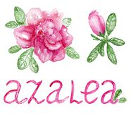 Flowers azalea on the white background with inscription Royalty Free Stock Image