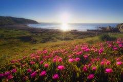 Flowers in Azkorri beach. Flowers in the Azkorri beach Royalty Free Stock Image