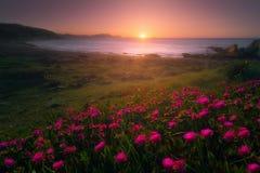 Flowers in Azkorri beach at sunset. Flowers in Azkorri beach at the sunset Royalty Free Stock Photography