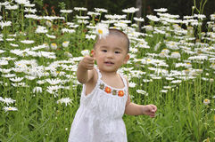 Flowers and baby. A baby give you a flower Royalty Free Stock Photography