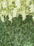 Flowers backdrop Stock Photos