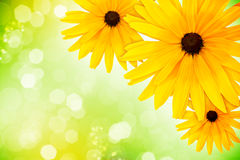 Flowers background Stock Photography
