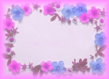 Flowers background. Pink and blue flowers on the white background Stock Images