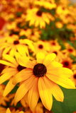 Flowers background. A beautiful floral background of big yellow flowers blooming Stock Photo