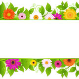 Flowers Background Stock Photos