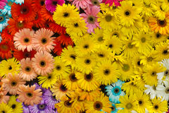 Flowers background Stock Images