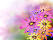Flowers background royalty free stock images
