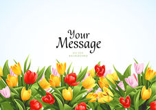 Flowers background. Vector background for poster, invitation or greeting card.Tulips Stock Photography