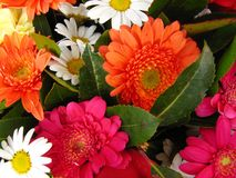 Flowers background. Vibrant and colorful background of flowers Royalty Free Stock Photo