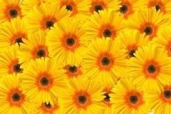 Free Flowers Background Stock Image - 4385061