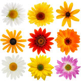 Flowers on with background Royalty Free Stock Photos