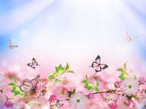 Flowers background with amazing spring sakura Stock Photography
