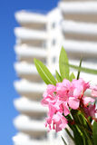 Flowers on a background of the apartment complex Stock Images